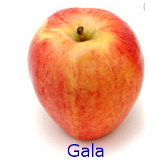 Gala Apple - How to Use 10 Common Apple Varieties
